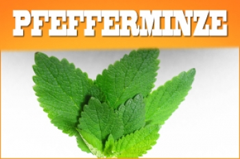 Pfefferminz Liquid 30ml